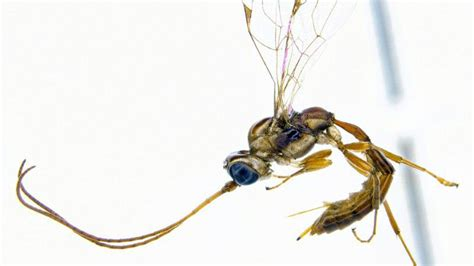 Scientist Uses Lucius Malfoy as Evidence For Why Wasps