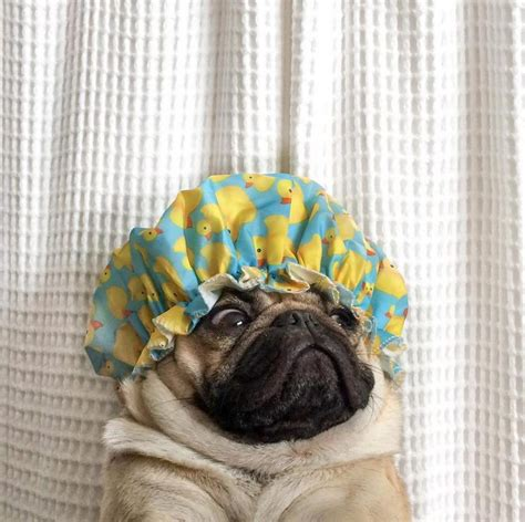 Ten Pics of Doug the Pug That Will Make Your Day Much