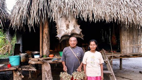 Raids by uncontacted Amazon tribes raise fears of violence