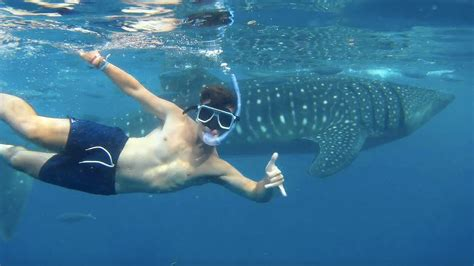 SWIMMING WITH WHALE SHARKS - OSLOB, PHILIPPINES! - YouTube