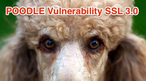 POODLE SSL Vulnerability, How to Enable TLS for PHP?