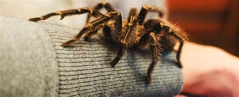 We Really Are Born With a Natural Fear of Spiders And