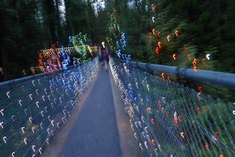 Christmas in a Cup : Canyon Lights - Capilano Suspension