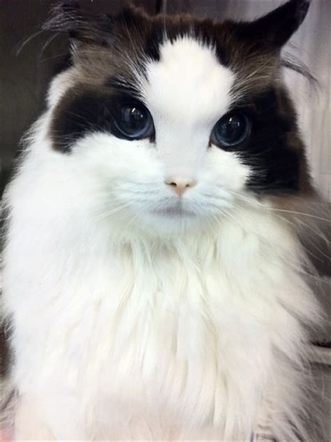 12 of the Most Beautiful Cats in the World - We Love Cats