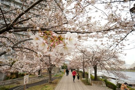 Spring In Japan: Traveling, Clothing And Weather In March