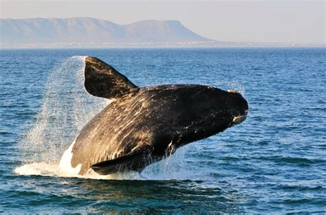 Full Day Hermanus Tour - Cape Town Tours & Day Trips